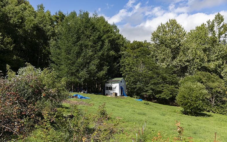 森の木々に埋もれるようにポツンとたたずむ小屋。昨年秋には屋根もかけられ、雪にも耐えて2年目を迎えた(写真撮影/川村一之)