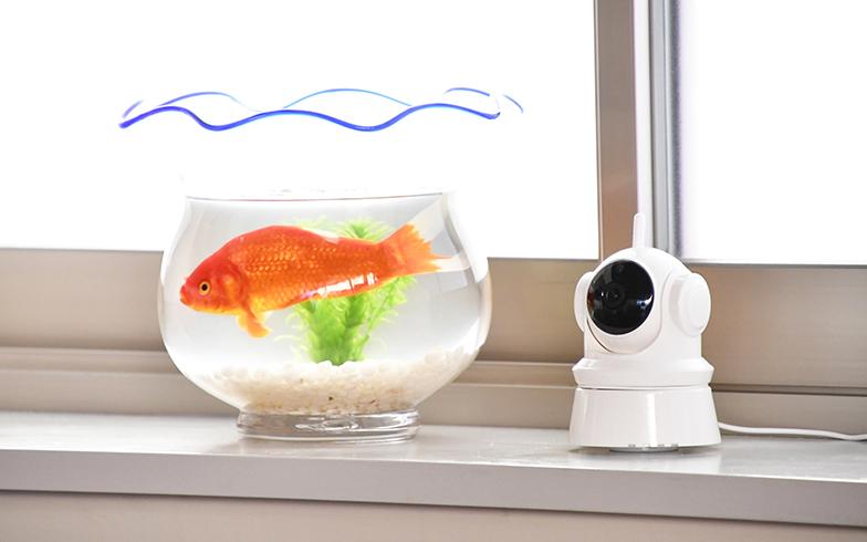 前作から飼育を続けている金魚。その脇には外出先でも様子を見られるネットワークカメラが(写真提供/カンテレ)