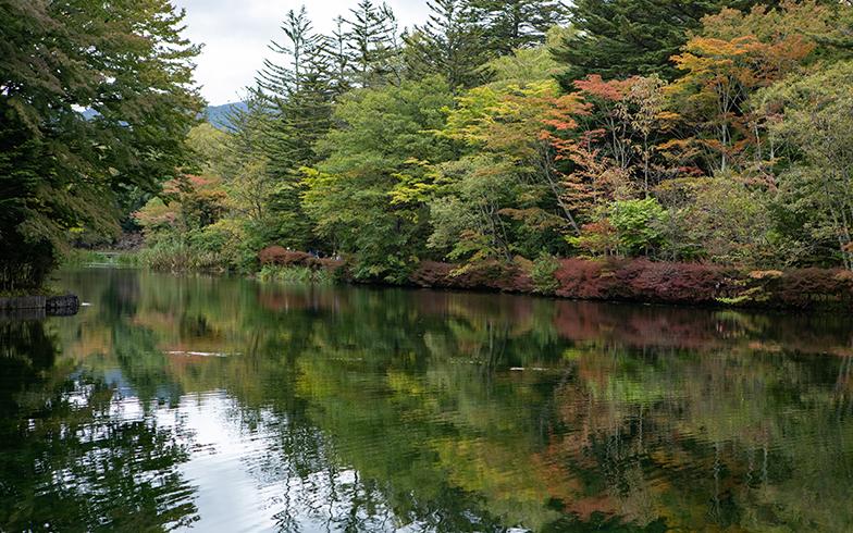 軽井沢の自然は豊かだ(写真撮影/片山貴博)