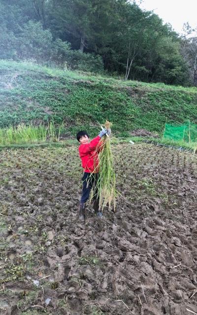 家の近くに借りた畑では、もち米を育てている(写真提供/向井さん)