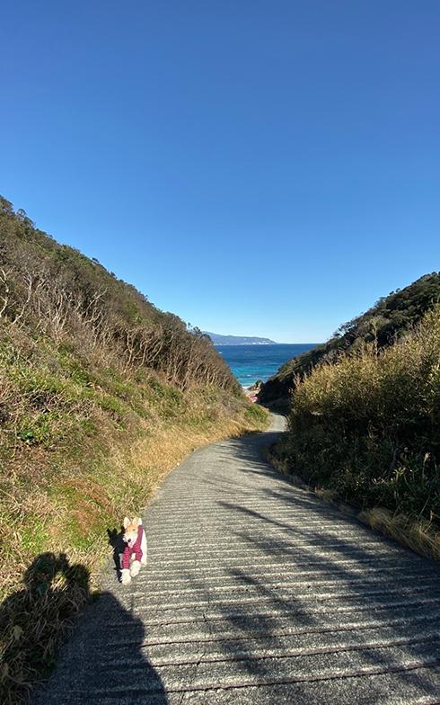 よく足を運んだ爪木崎の須崎遊歩道。海沿いの景観が美しい(写真撮影/本人)