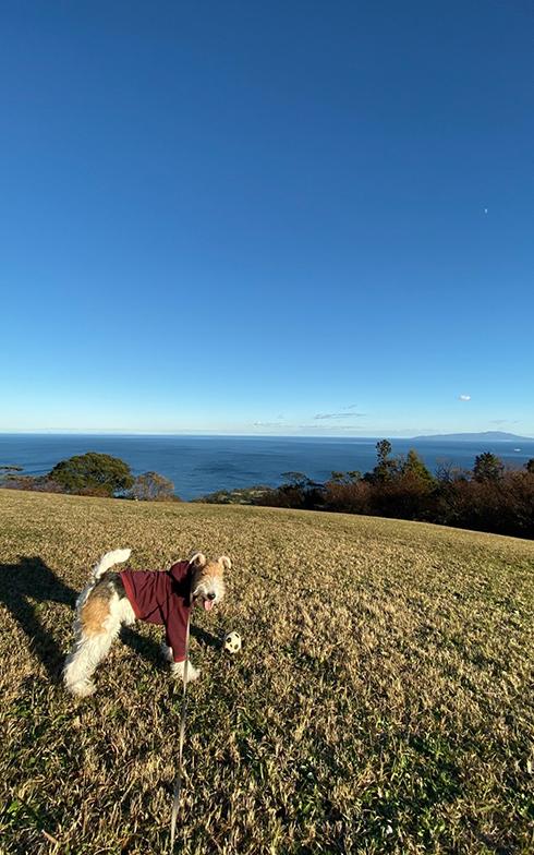 愛犬グラム君お気に入りの散歩スポット、小室山。芝生広場があり、ボール遊びを楽しむ(画像提供/本人)