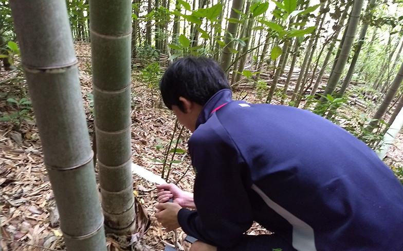 竹林保全活動の様子(画像提供/鈴木さん)