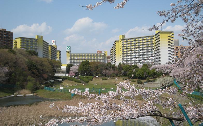 90haにもおよぶ広大な敷地の自然に囲まれた若葉台団地(写真提供/神奈川県住宅供給公社)