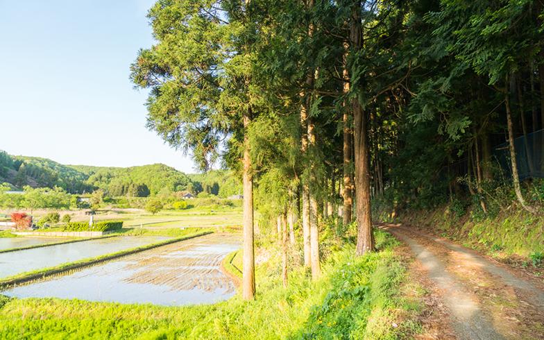 「田舎バックパッカーハウス」周辺 田んぼなど、緑が広がっている。近くには海も(写真撮影/中川生馬)