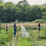 コロナ禍のドイツは園芸がブームに。農園でつながりづくり進む