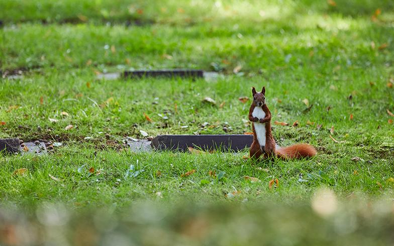 緑が多いドイツの墓地では、墓地を自由に走りまわる野生のリスに出会うことも(撮影/Shinji Minegishi)