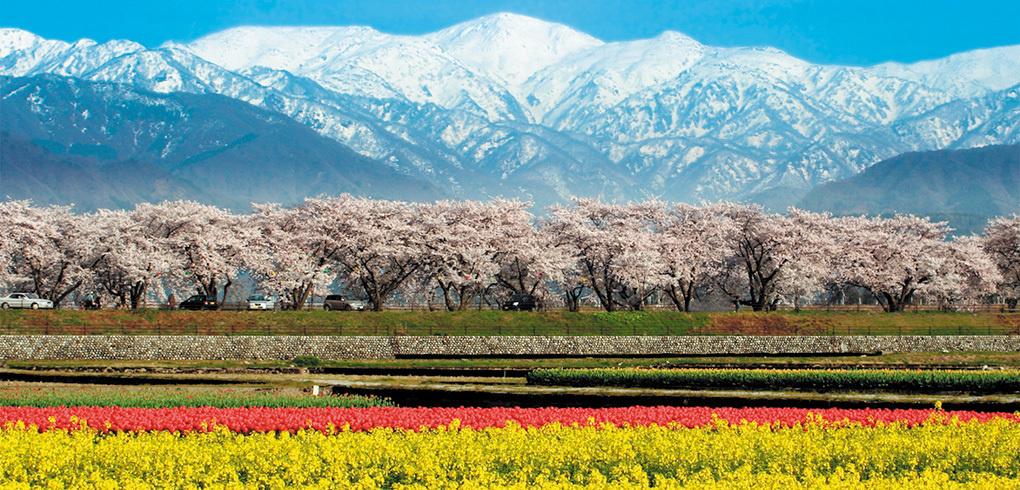 春の朝日町の風景(写真提供/富山県朝日町)