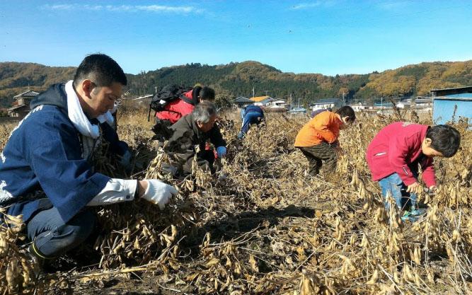 小川町での大豆収穫体験の様子(画像提供/小川町)