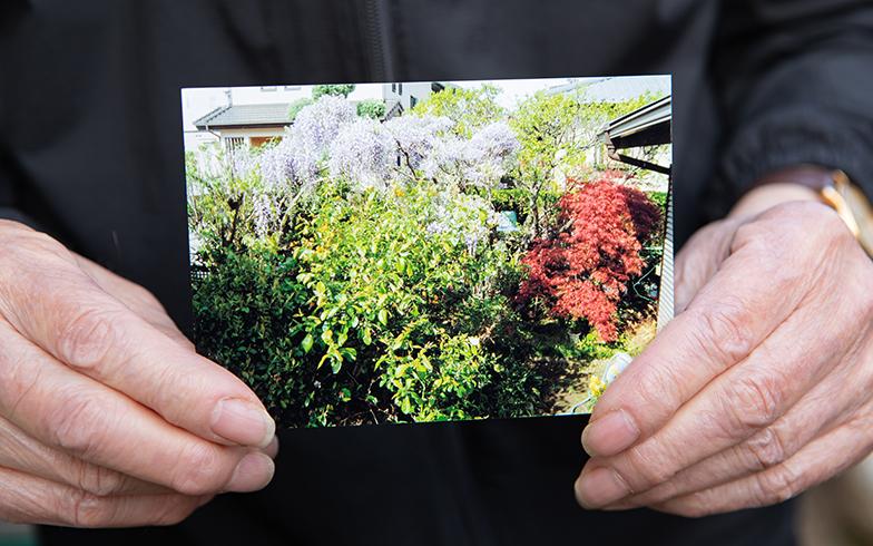 おじいちゃんがお庭の手入れが難しくなったため今は少し寂しくなってしまいましたが、かつては藤の花なども咲き誇る見事なものでした(撮影/片山貴博)