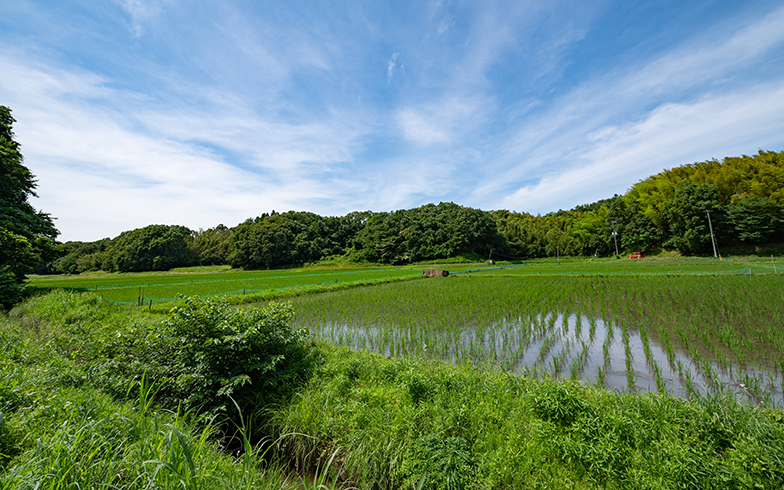 東京から電車で2時間弱。広い空と水田に心和みます。日本人の原風景なんでしょうね、きっと(写真/土屋比呂夫)