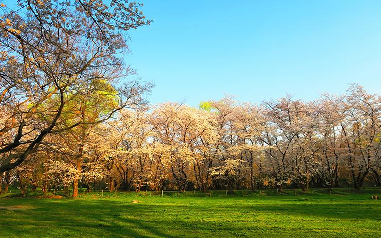 みずほ台駅から車で約10分ほどで行ける秋ヶ瀬公園(写真/PIXTA)