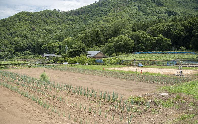畑では地元農家さんの手を借りて、ネギや根菜類を栽培している(写真撮影/塚田真理子)