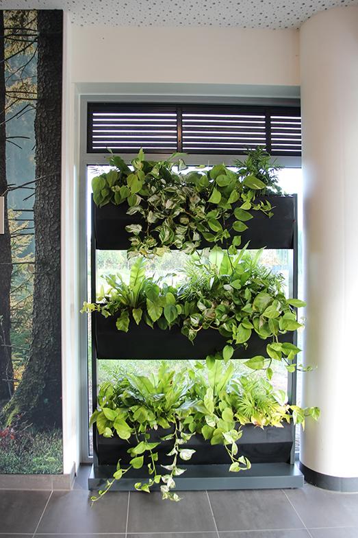 定期的な水やりが心配されていたエントランスの植物(写真提供/Vesteda)
