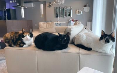 """猫マスター響介さんが叶えた""""猫ファースト""""の注文住宅。賃貸ワンルームから猫御殿まで変遷も紹介!"""
