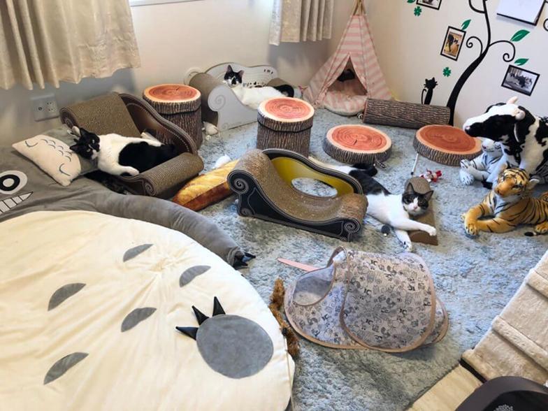猫のためだけのひと部屋。悠々とくつろぐ猫たちの姿を見るのは何よりの喜び(画像提供/響介さん)