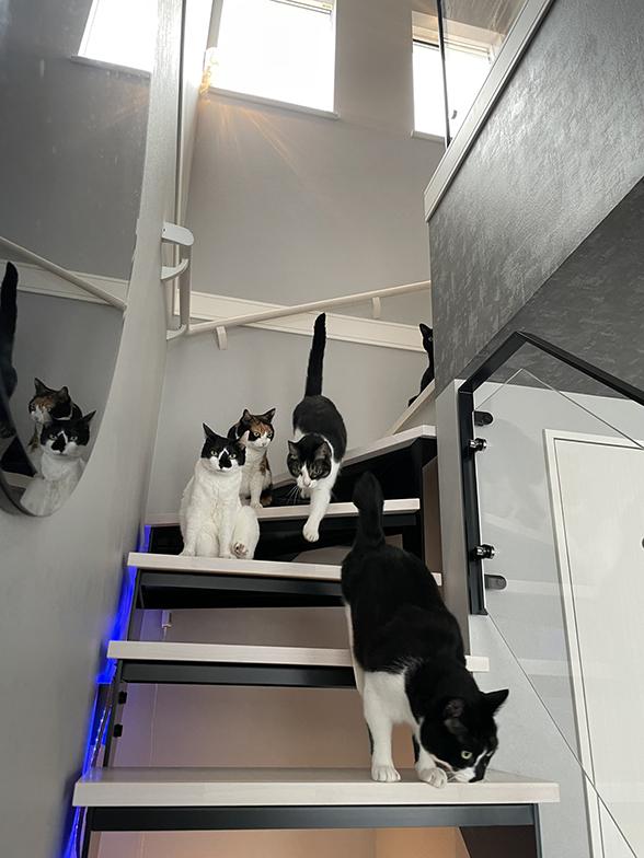 階段も猫の遊び場。踊り場に窓を設け、日中は自然光で、夜は照明で足元が見えるようにしている(画像提供/響介さん)