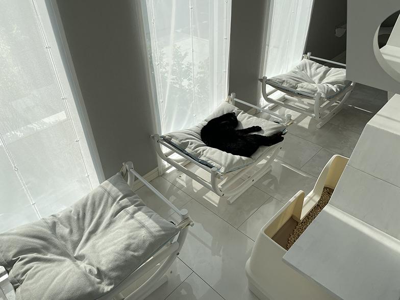 猫スペースの窓際にハンモックのベッドを一列に並べた。直射日光に当たりすぎるのも良くないそうでカーテン越しの光で日向ぼっこ(画像提供/響介さん)
