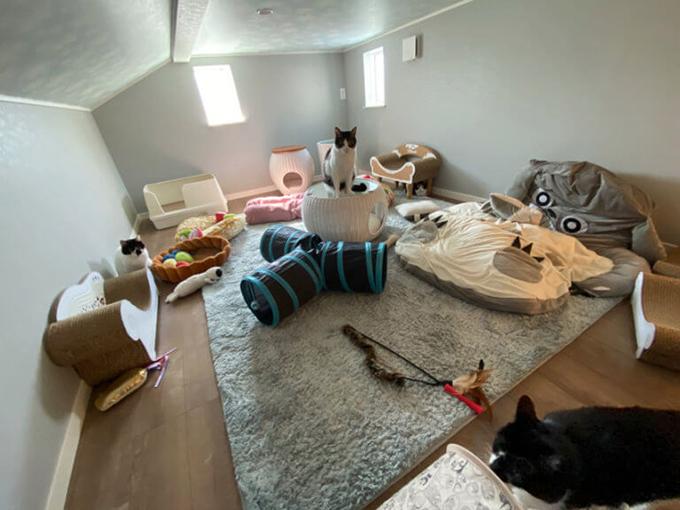 ベッドやトイレを置いた約7.5畳の猫部屋は、たとえ響介さんでも掃除のとき以外は立ち入り禁止(画像提供/響介さん)