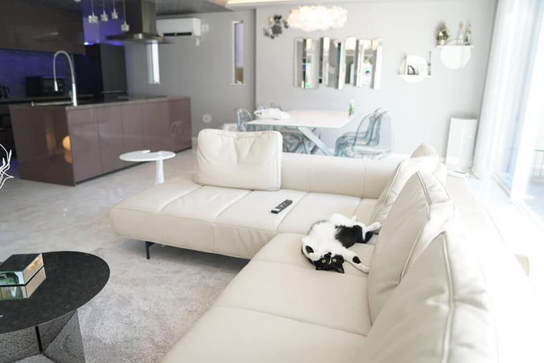 新居に馴れてソファで大の字になって人間のようにくつろぐリュックくん(画像提供/響介さん)