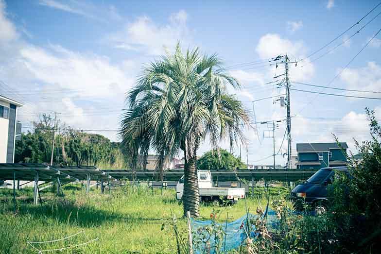 隣の空き地にはミナトバラックス住民向けの「ミナ畑」も。(写真撮影/ヒロタケンジ)
