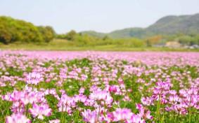 使わなくなった畑や田んぼ、どうしよう。農地の相続などで困ったときの新しい選択肢